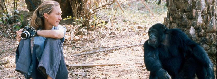 Αν ο άνθρωπος προέρχεται από τον πίθηκο, τότε γιατί υπάρχουν ακόμα πίθηκοι;