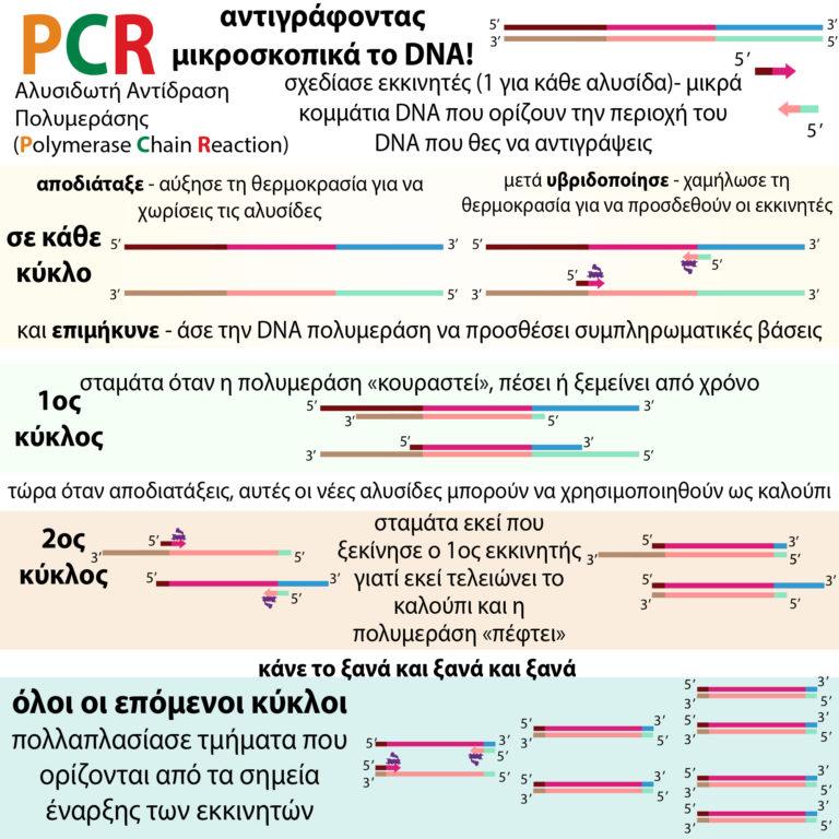 PCR_greek-100-1